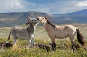 donkey-love-640x426 2